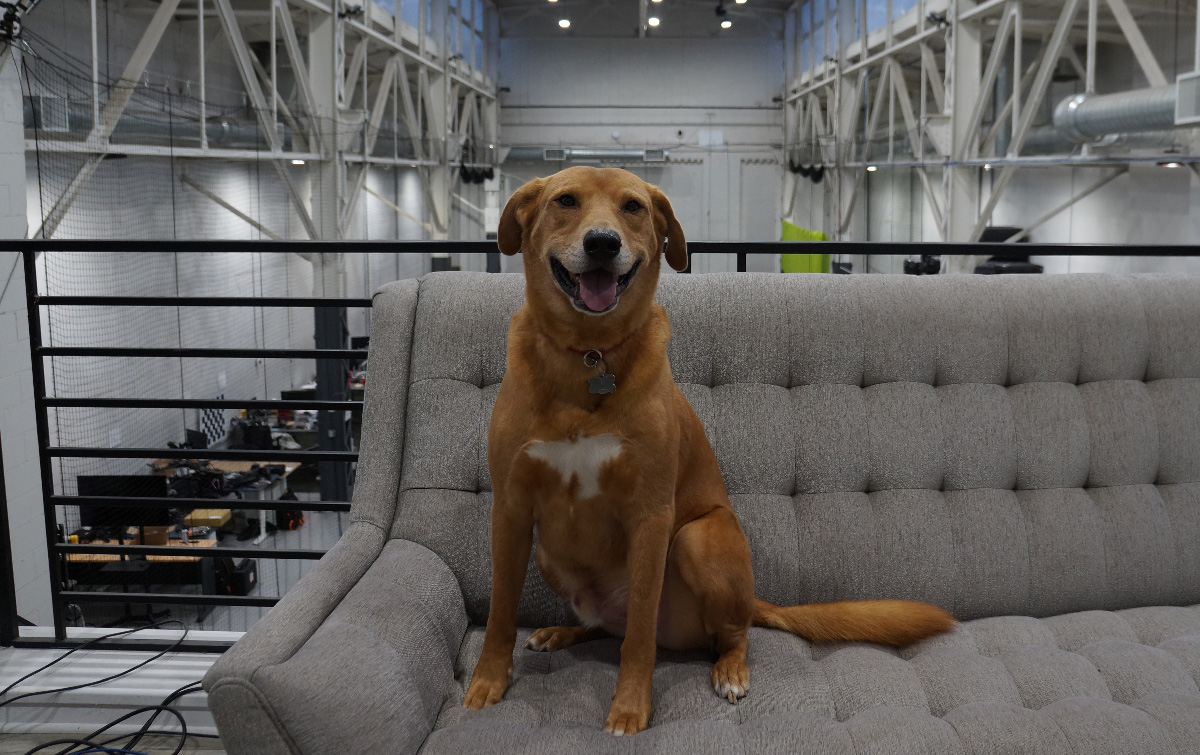 Meet Kody, Exyn's Chief Dog Officer